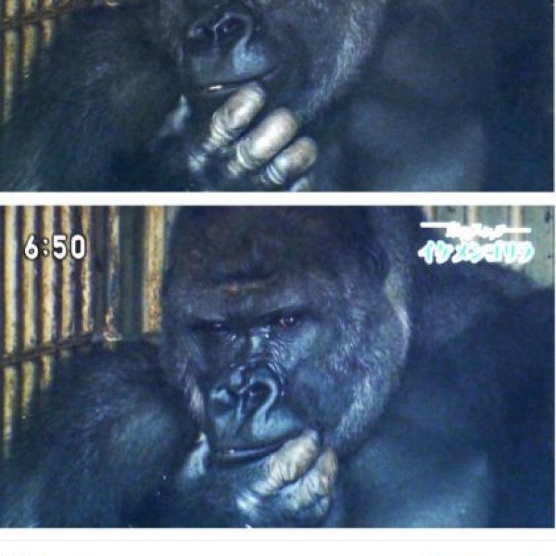 El animal gusta a las jóvenes japonesas por su apariencia. Foto:vía Twitter