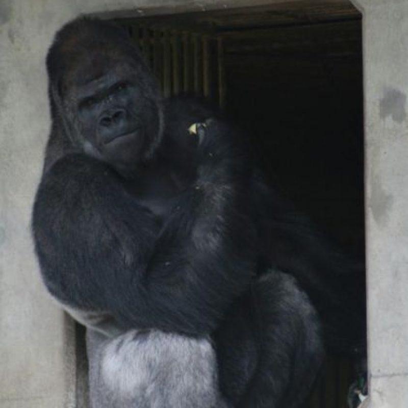 Y las visitas al zoológico se han incrementado desde entonces. Foto:vía Twitter