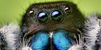 Así sea una araña hecha para matar mosquitos, ustedes tendrán que eliminarla. Foto:vía Wikipedia