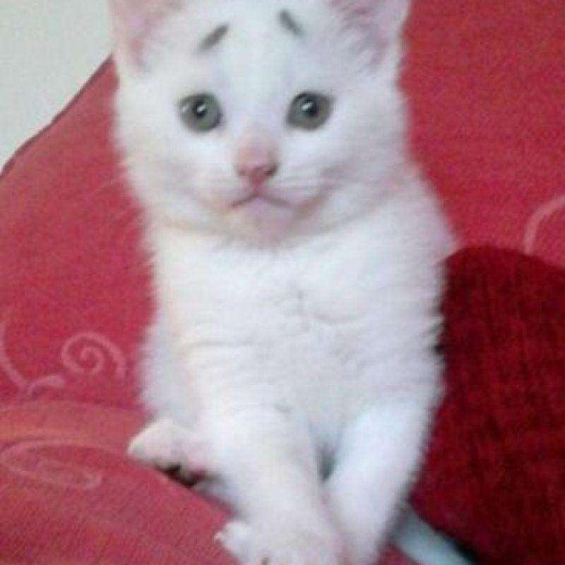 2. Su nombre es Concerned kitten -gatito preocupado- y tiene ocho semanas de nacido. Foto:Vía Facebook.com/garybrows