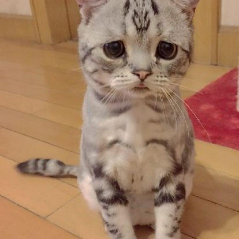 1. La gatita con cara de tristeza Foto:VíaInstagram/@lanlan731