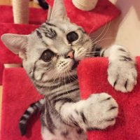 Su ama se ha hecho popular en Instagram por publicar las fotos de su gata triste. Foto:VíaInstagram/@lanlan731