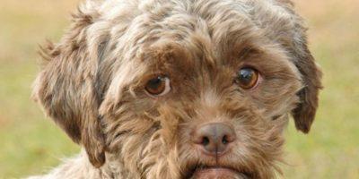 6. El perro con cara de humano. Su nombre es Tonik. Foto:Vía Youtube