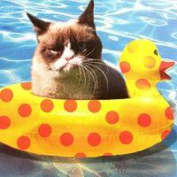 El gato más molesto de Internet Foto:Vía Instagram.com/realgrumpycat