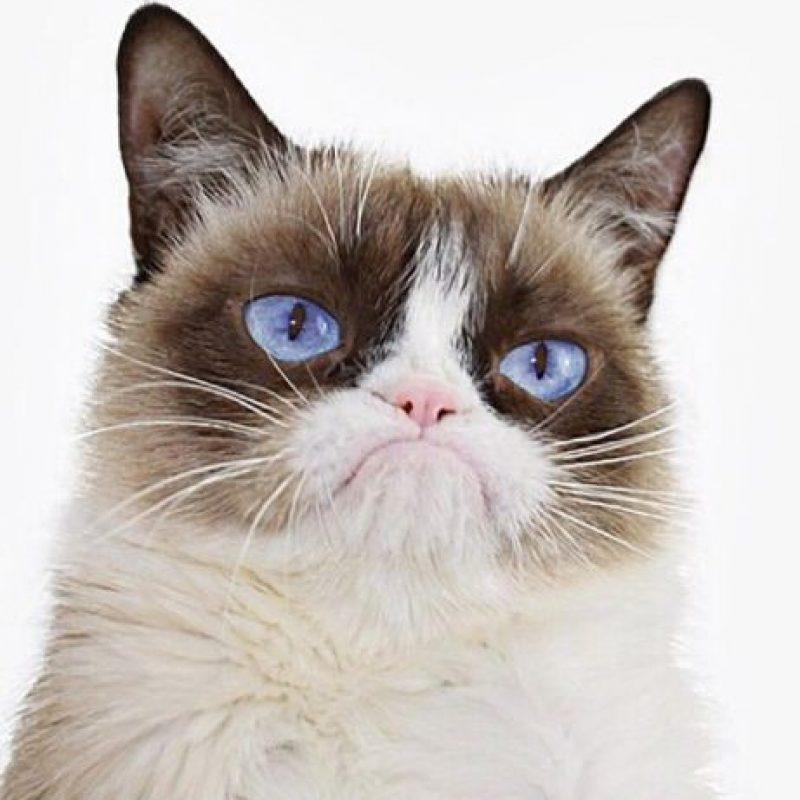 3. Grumpy Cat Foto:Vía Instagram.com/realgrumpycat