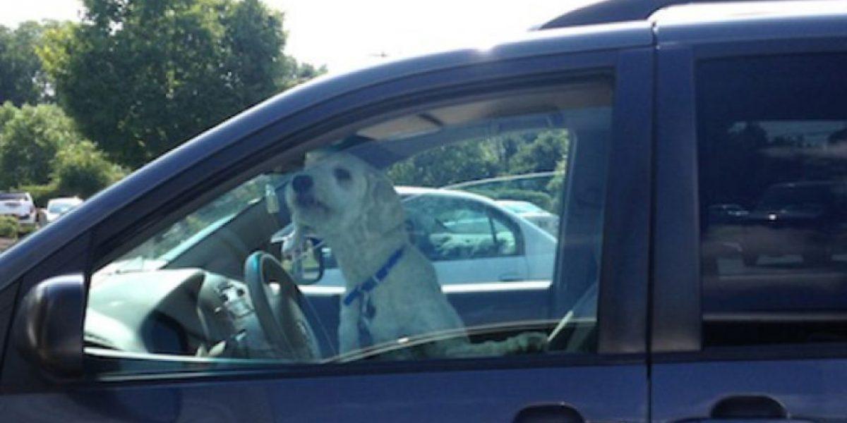 VIDEO: Esta es la horrible razón por la que no deben dejar a su perro dentro de un auto
