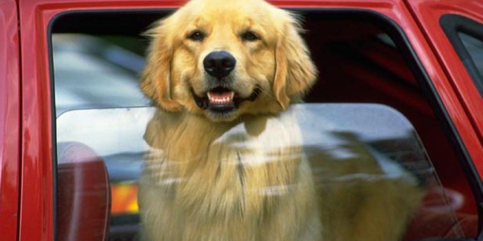 Llamen a la policía o a los encargados de los animales en su área. Foto:vía Getty Images
