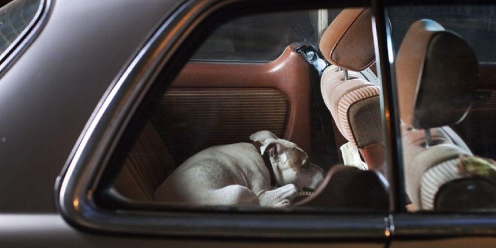 Los perros pueden no solo tener una ataque sino llegar a sangrar internamente. Foto:vía Getty Images
