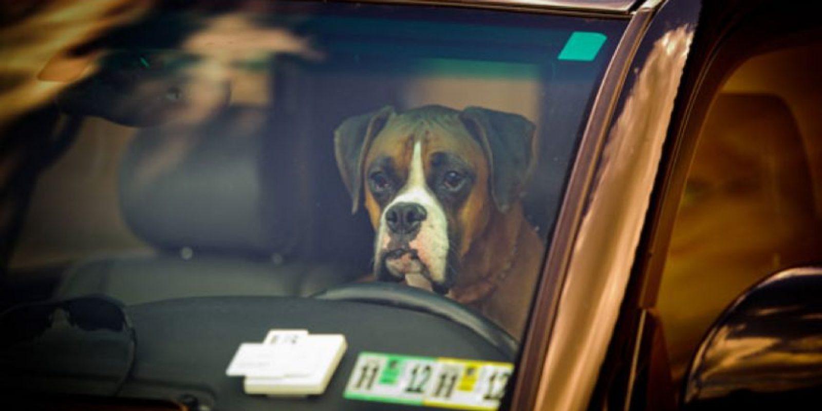 Si ustedes van a dejar a su perro, abran las ventanas. Foto:vía Getty Images