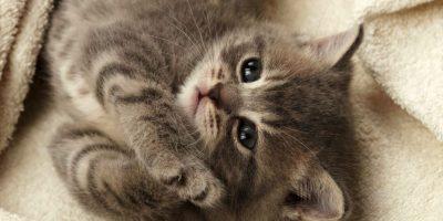 No creerás los beneficios que tendrás si tienes un gato