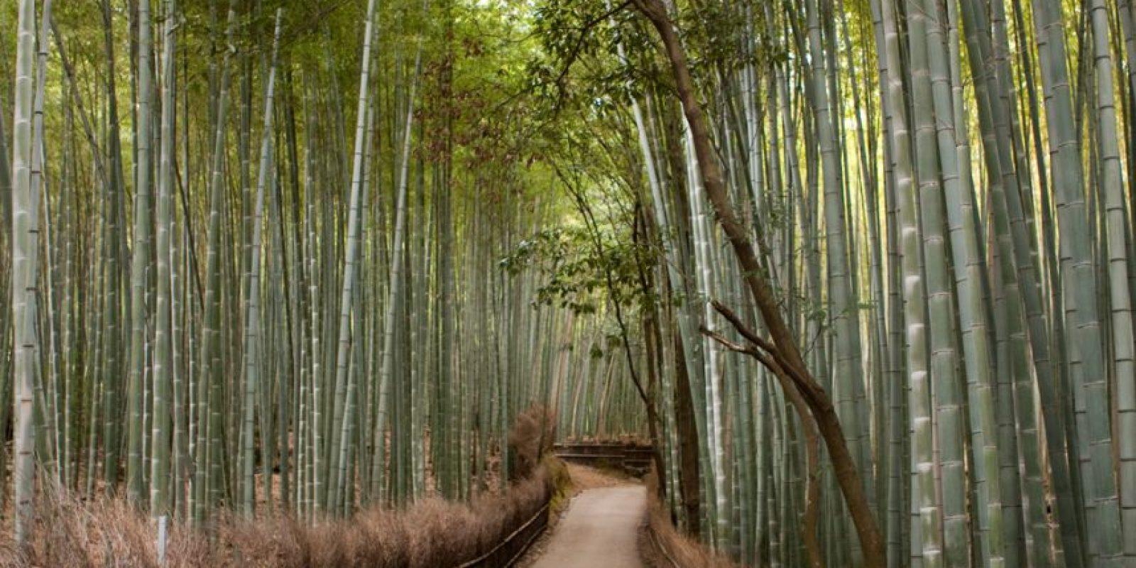 Bosques de Bambú en Arashiyama, Japón. Foto:vía Flickr.