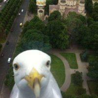La cara de una paloma tapando la vista Foto:Imgur
