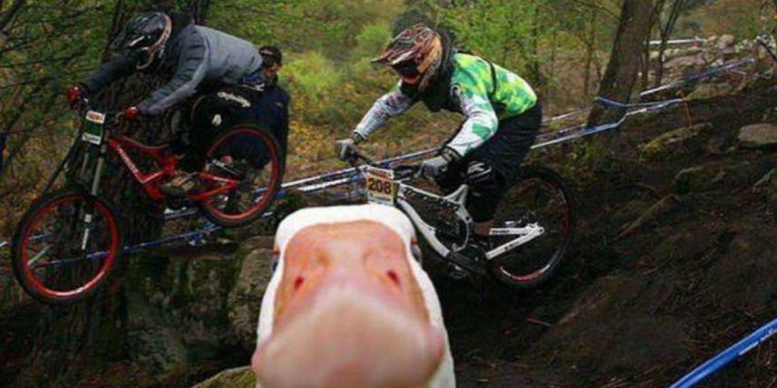 Un pato en el lugar menos esperado. Foto:Reddit