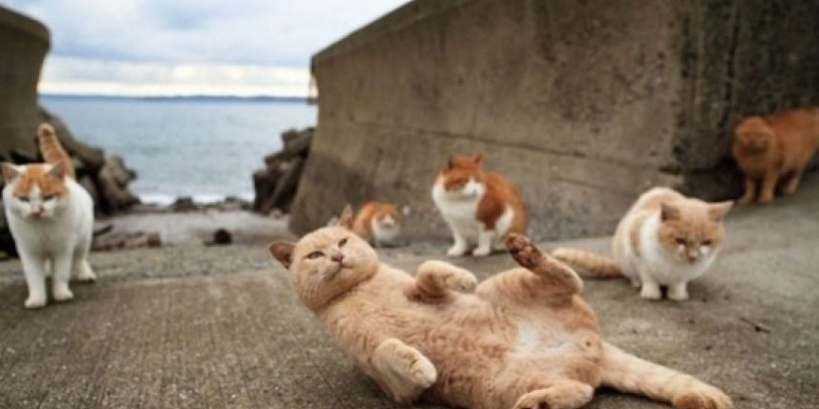 4. The Cat Island. Es una isla japonesa. Foto: Whenoneearth