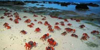 5. Christmas Island Foto:Wikimedia