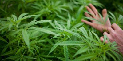 Chile aprueba ley que despenaliza cultivo y consumo de marihuana