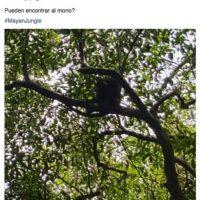"""""""¿Pueden encontrar al mono?"""", el músico interactuaba con sus fans por medio de las redes sociales Foto:vía facebook.com/DashBerlinOfficial"""