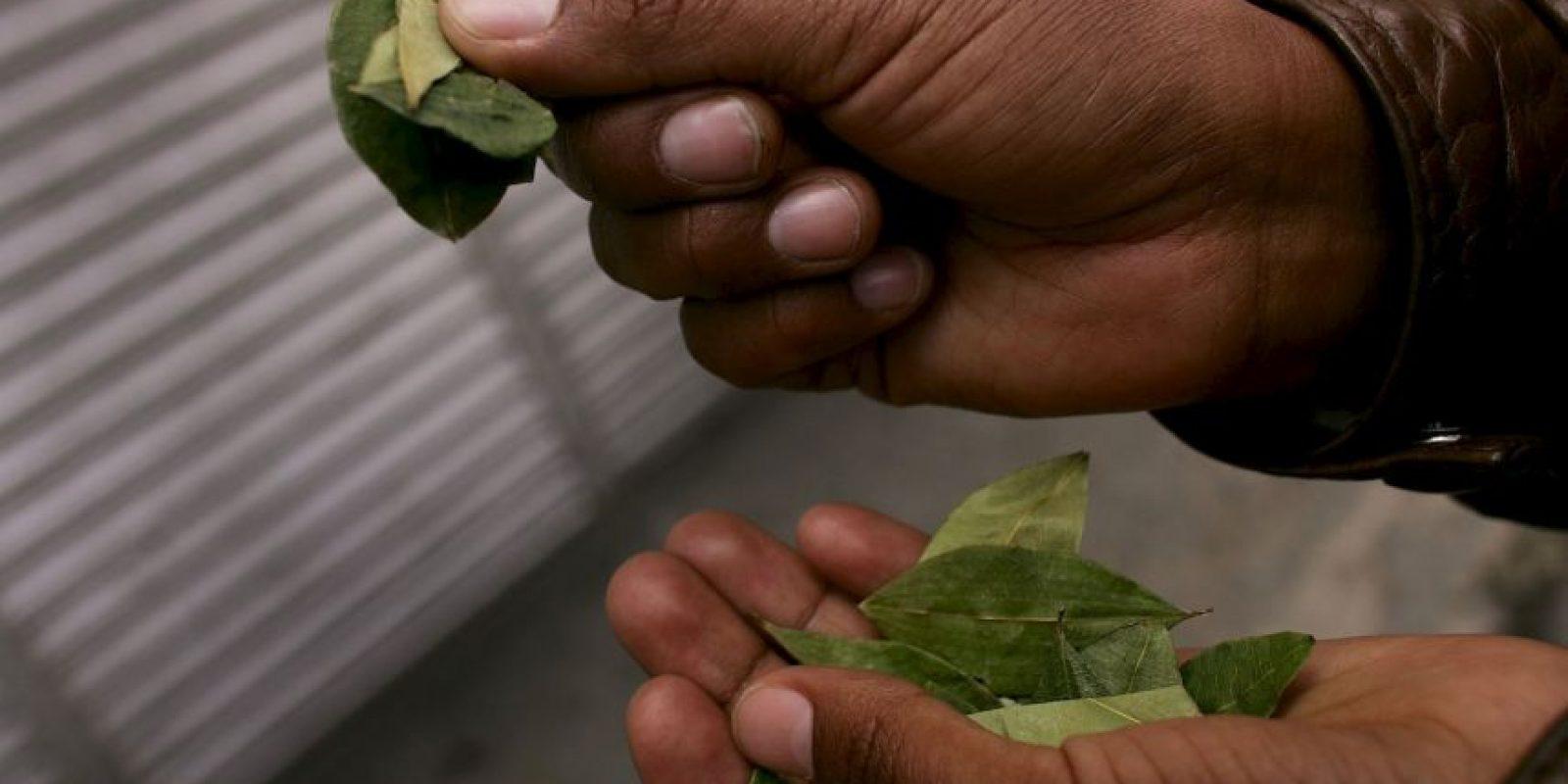 2. Sin embargo, dicho portal de activistas e investigadores expone que mascar hojas de coca no provoca daños a la salud. Foto:Getty Images