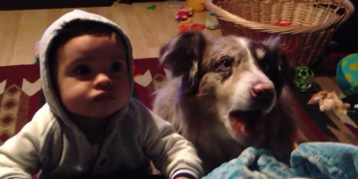 VIDEO: Este perro pudo decir