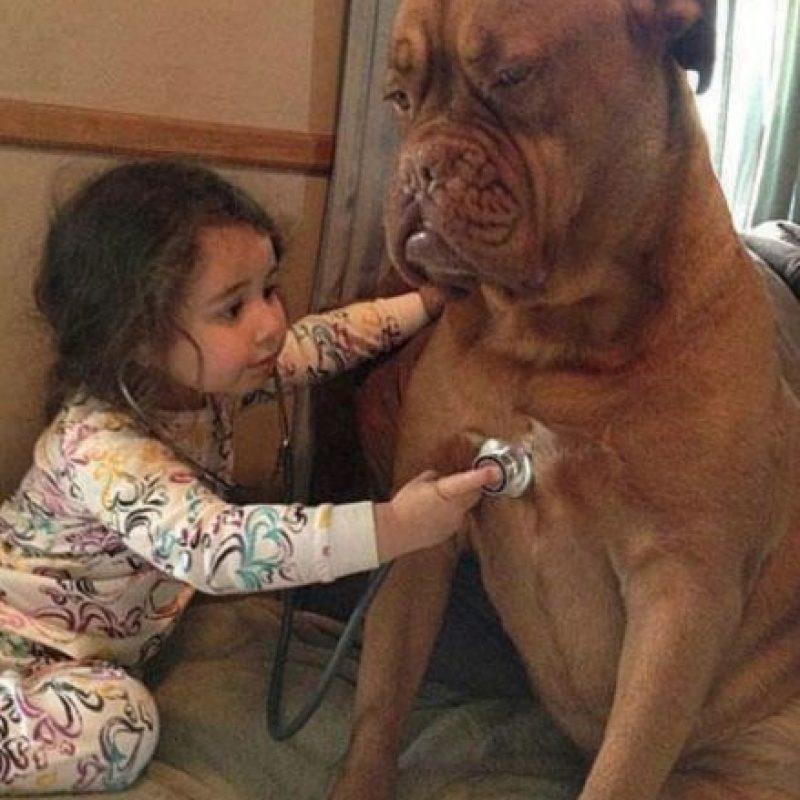 El doctor y su paciente ¿perro? Foto:Buendiario