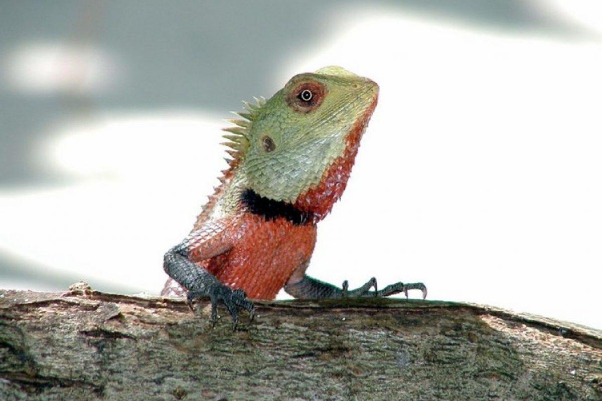 Wildlife de las Maldivias Foto:Wikimedia