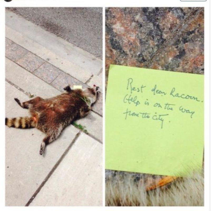 """Sin embargo, cerca del medio día el mapache seguía ahí. Fue cuando una persona le puso una nota que decía: """"Descansa querido mapache. La ayuda ya viene en camino"""". Foto:Instagram.com/emilyjs5"""