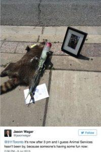 """Fue entonces cuando Norm Kelly, concejal de la ciudad, envío un tuit diciendo """"Por favor, envíen a alquilen a recoger a este mapache"""" Foto:Twitter.com/Norm"""