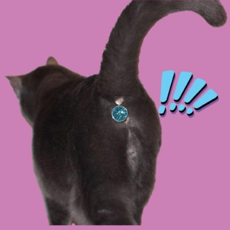 ¿Ustedes le comprarían en Twinkle Tush a su mascota? Foto:Vía Twinkle Tush