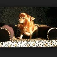 Peluca para perra Foto:Pinterest