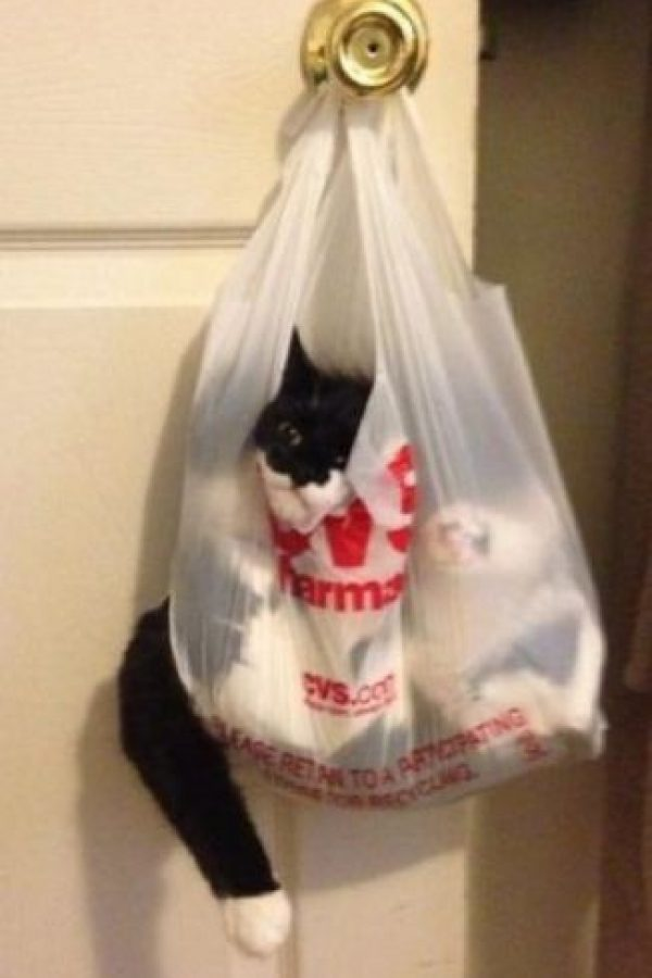 Él decidió investigar qué había dentro de esta bolsa. Foto:Imgur