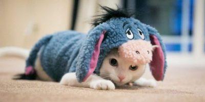 """El burro de """"Winnie Pooh"""", Ígor Foto:Pinterest"""
