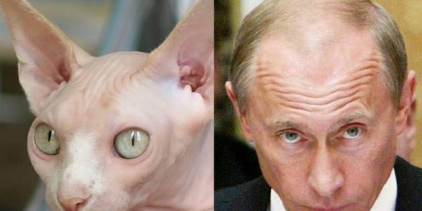 Él no está disfrazado, pero tampoco necesita estarlo para parecerse al mandatario de Rusia, Vladímir Putin. Foto:Tumblr