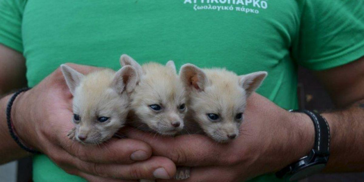 Zoológico de Grecia sin dinero para alimentar a sus animales