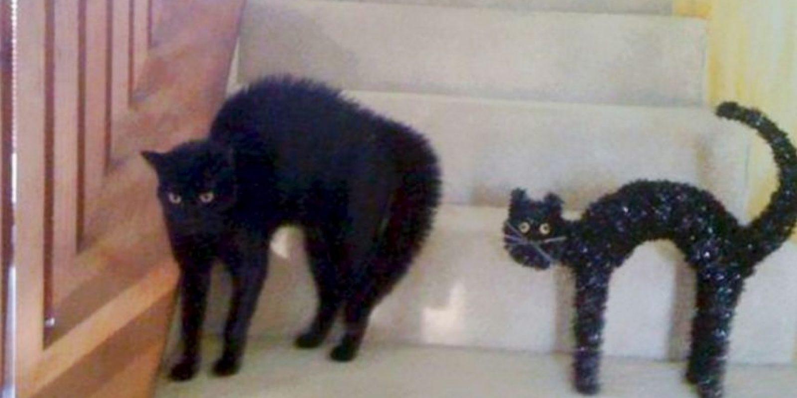 6. El gato de día de brujas Foto:Pinterest