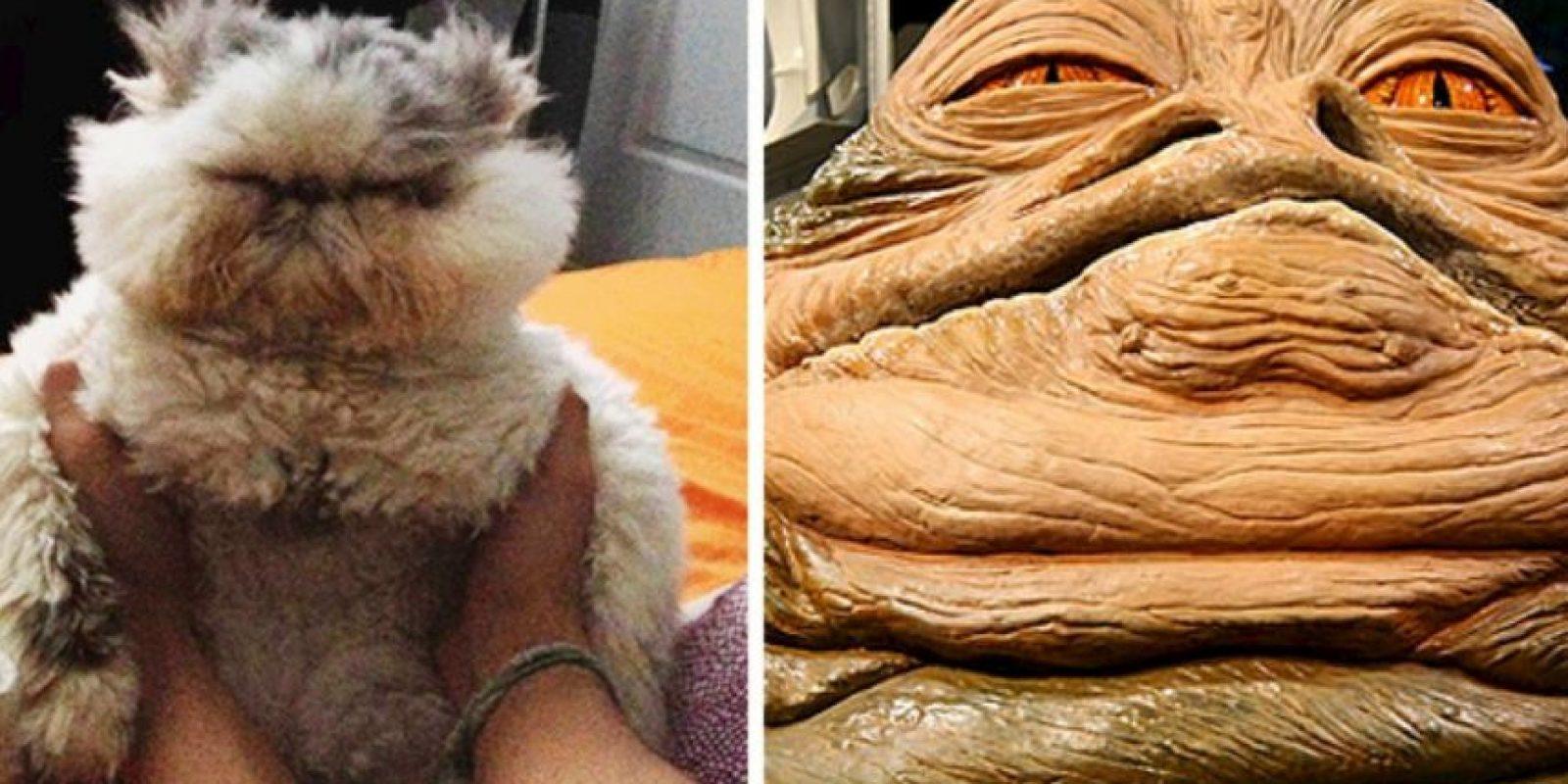 La comparativa Foto:Tumblr