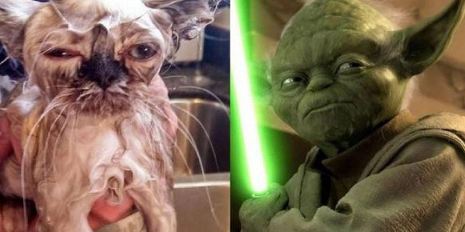 """1. Yoda de """"Star Wars"""" Foto:Lookslike.com"""