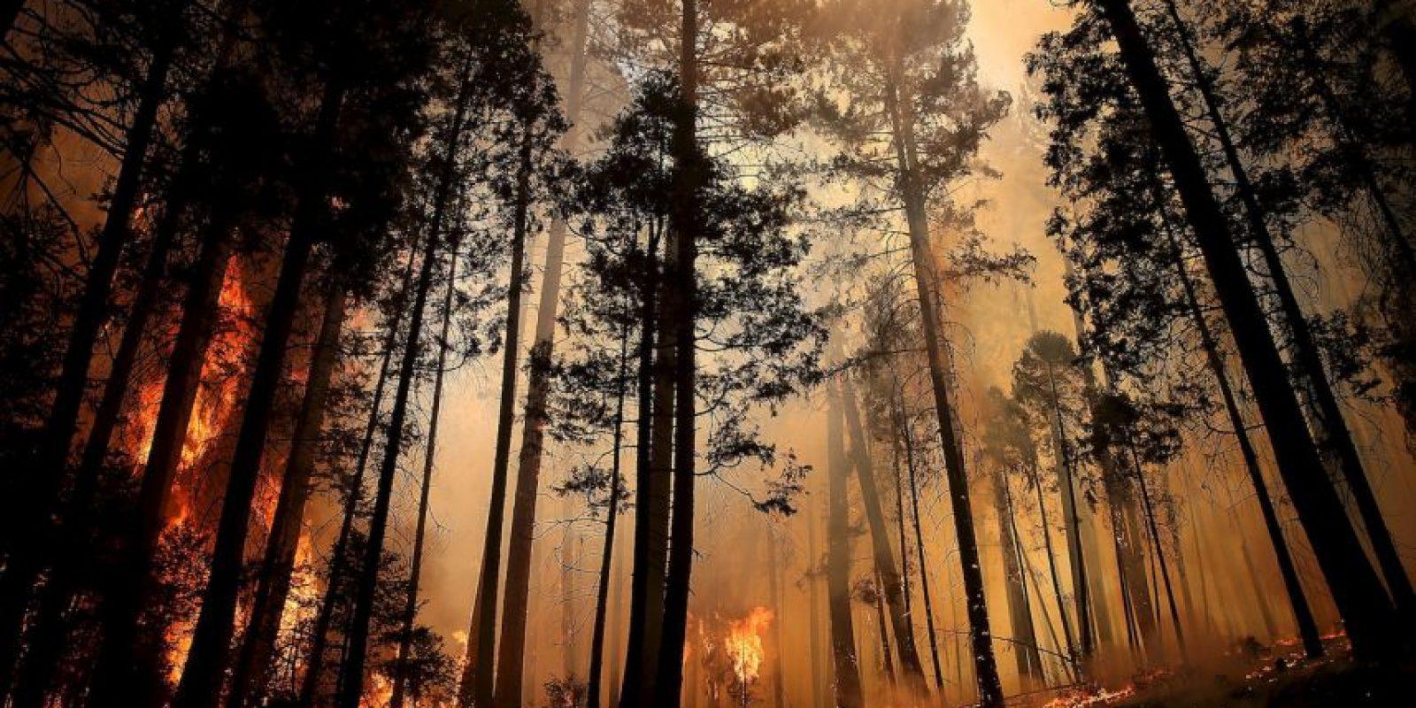 Un incendio forestal es el fuego que se extiende sin control en terreno forestal afectando a combustibles vegetales Foto:Getty Images