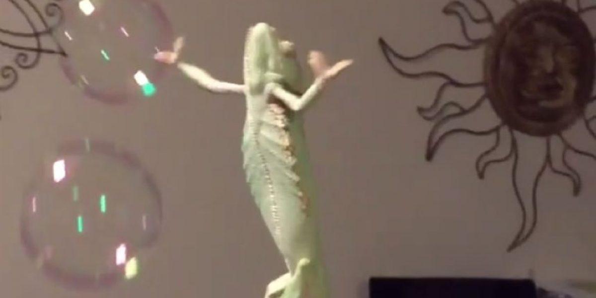 VIDEO: Este es el divertido pasatiempo de un camaleón