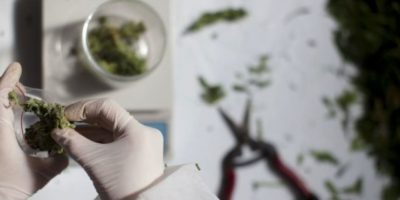 """Según el portal """"Marihuana Medicinal"""", el TCH de la marihuana estimula la producción de serotonina, sustancia que interviene en las migrañas Foto:Getty Images"""