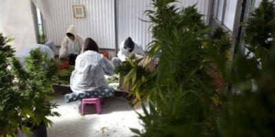 """El periódico español """"ABC"""" reseñó un estudio de la Universidad Complutense de Madrid que detalla que la marihuana puede ayudar a frenar la progresión de la esclerosis múltiple Foto:Getty Images"""