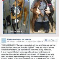 Después de ser rescatadas Foto:Vïa FAcebook/angelsrescue?fref=nf
