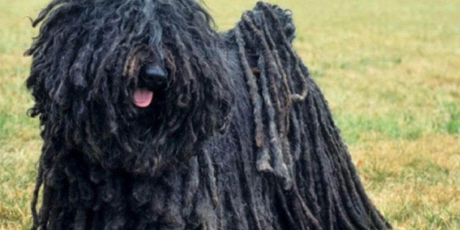Un granjero en China tenía dos mascotas que pensaba era perros Foto:Wikimedia.org