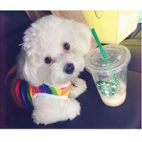 """""""Tenemos el corazón roto"""", escribió la cantante en su red social Foto:Instagram/DemiLovato"""
