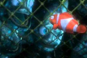 """Unos pescadores los atrapan en redes y """"Marlín"""" los insta a ir hacia abajo para salvar su propia vida. Foto:vía Disney/Pixar"""