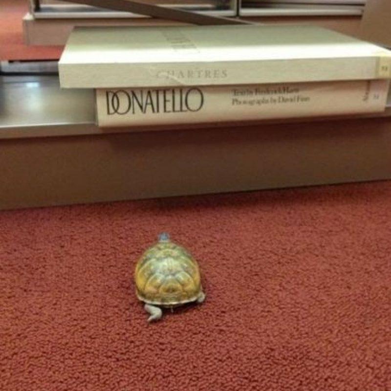 ¿Será Donatello? Foto:Reddit