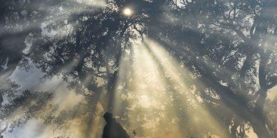 Incendio forestal en España. Foto:AFP