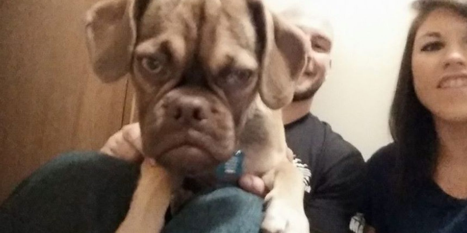 Foto: vía facebook.com/Earl-The-Grumpy-Puppy