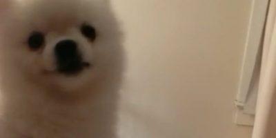 VIDEO: El extraño estornudo de este perro los sorprenderá