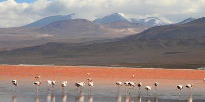 Laguna Colorada, Bolivia Foto:Wikimedia