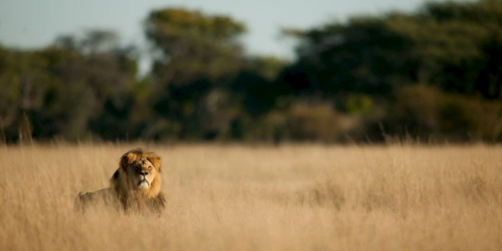 También informó que Cecil no era hermano de Jericho. Foto:Vía facebook.com/brent.stapelkamp